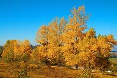 Fall trees Stock Image