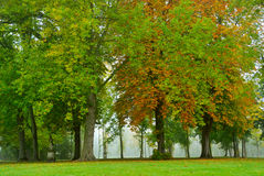 Fall Trees. Bright fall trees in Garden Royalty Free Stock Image