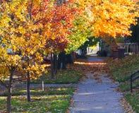 Free Fall Trees Above City Sidewalk - Denver Colorado Royalty Free Stock Photos - 34912818