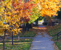 Fall Trees above City Sidewalk - Denver Colorado Royalty Free Stock Photos