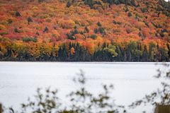 Fall trees in fall in Algonquin Royalty Free Stock Photos