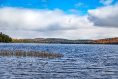 Fall trees in fall in Algonquin Royalty Free Stock Photo