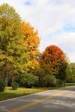 Fall Trees Along A Road Stock Photo