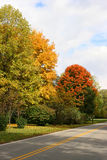 Fall trees along a road Stock Photo