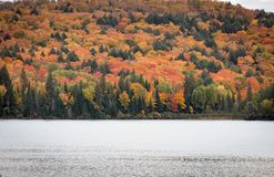 Fall trees in fall in Algonquin Royalty Free Stock Images