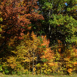 Fall Trees. Background with yellows, rust and green colors stock photography