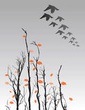 Fall Trees and Birds Flying. Background with fall trees and birds flying over Royalty Free Stock Photo
