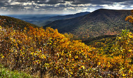 Fall Trees In The Blue Ridge Mountains. Royalty Free Stock Photography