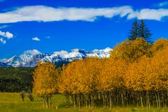 Fall trees and a bright blue sky. In sheep river Provincial Park, Alberta, Canada Stock Image