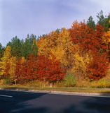 Fall trees - center. Stock Photography