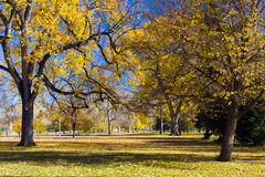 Fall Trees in City Park Royalty Free Stock Images