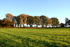 Fall trees edge a farm field Stock Photos