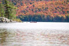 Fall trees in fall in Algonquin Royalty Free Stock Image