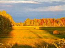 Fall trees. And field Royalty Free Stock Images
