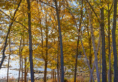 Fall trees in foreground with coastline in background Stock Image