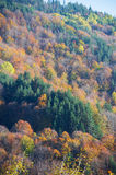 Fall trees in the forest Royalty Free Stock Photos