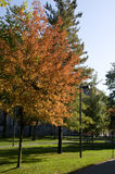 Fall Trees at Harvard Stock Photo