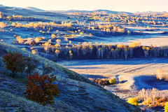 The fall trees on hillside Stock Photography