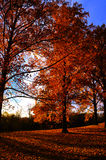 Fall Trees. Trees in Illinois in the Fall Stock Photos