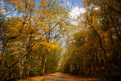 Fall Trees In Southern Ohio Royalty Free Stock Photos