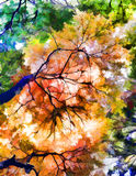 Fall Trees in Japan. An abstract photo rendition of looking straight up at fall trees in Japan Royalty Free Stock Image