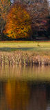 Fall trees and lake. Autumn foliage landscape with grasses, trees and a calm lake Stock Photography