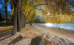 Fall trees beside lake Stock Images