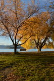 Fall trees beside lake Royalty Free Stock Image