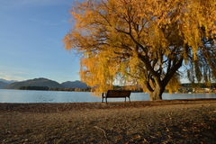 Fall trees beside lake Stock Image