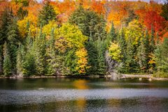 Fall trees with lake stock photo