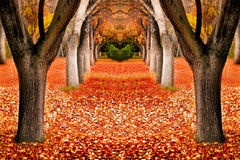 Fall Trees Landscape Stock Images
