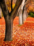 Fall Trees Landscape Royalty Free Stock Images