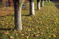 Fall trees landscape Stock Photos