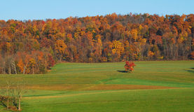 Fall trees meadow grass field royalty free stock photography