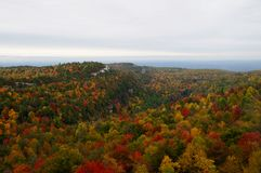 Fall trees. Mountain landscape with multicolored autumn trees Stock Photo
