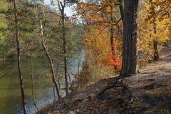 Fall trees near water Stock Image