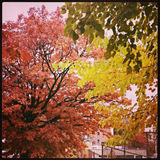 Fall Trees in New York City. Colorful Fall trees in New York City with Instagram effect filter Stock Photography