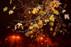Fall trees night lights sight Royalty Free Stock Photo
