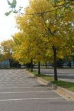 Fall Trees in Parking lot Stock Photos