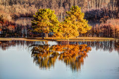 Fall trees. Reflecting in water Stock Photography
