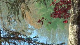 Fall Trees Reflection on Lake Surface Orange Red Blue Green stock video