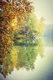 Fall trees reflection Stock Photography