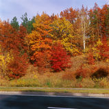 Fall trees - right. Royalty Free Stock Photo