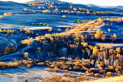 The fall trees on the steppe Royalty Free Stock Photo