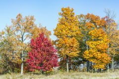 Fall Trees Stock Images