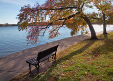 Fall trees at tidal basin Royalty Free Stock Photos