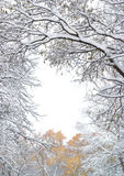 Fall trees under the snow Stock Image