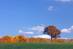 Fall trees upstate rural New York Royalty Free Stock Photo
