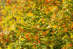 Fall trees yellow orange leaves nature background stock photos