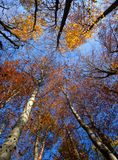 Fall Treetops Stock Images